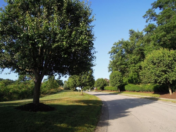 Rifgon Drive Entrance is Tree-lined with Sidewalks - Great For Walkers